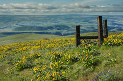 Scenic vista of green hills with wildflowers Royalty Free Stock Image