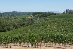 Scenic vista of the vines at a vineyard in Napa Valley, CA. Stock Photo