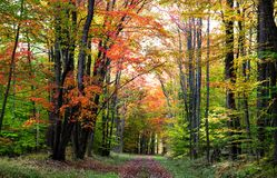 Scenic Walking Trail Stock Photography