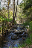 Scenic Water Stream in Tris Elies, Troodos mountains forest Royalty Free Stock Photography