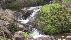 Scenic Waterfall Near Hana Maui. A scenic waterfall along the road to Hana on the island of Maui stock video