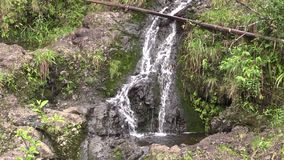 Scenic Tropical Maui Waterfall. A scenic waterfall along the road to Hana on the island of Maui stock video footage