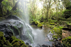 Scenic waterfall in the forest Stock Photography