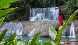 Scenic waterfalls and lrd flower in Jamaica Stock Photos