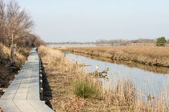 Scenic wetland landsape of nature reserve of river mouth Isonzo. In Italy Stock Images
