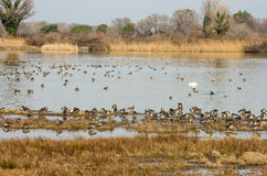 Scenic wetland landsape of nature reserve of river mouth Isonzo. In Italy Royalty Free Stock Photo