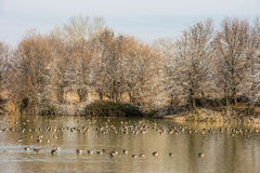 Scenic wetland landsape of nature reserve of river mouth Isonzo Royalty Free Stock Photography