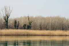 Scenic wetland landsape of nature reserve of river mouth Isonzo. In Italy Stock Photo