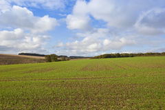 Scenic wheat field Royalty Free Stock Photography
