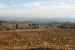 Scenic of Willamette Valley vineyard in fall Stock Photos