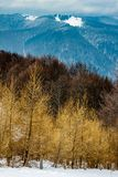 Scenic Winter landscape with layers of forests and mountain ridges - larch trees in foreground and a snowy peak in the distance. Bucegi mountains, Romania stock image