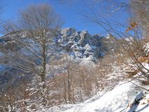 Scenic winter landscape with trees and snow covered mountain peaks, Untersberg, Bavaria stock photos