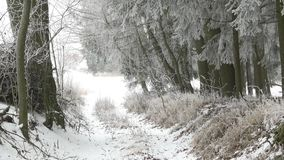 Scenic winter landscape. Trees in misty, gloomy winter day stock footage