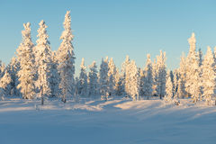 Scenic winter landscape in the taiga Royalty Free Stock Photography