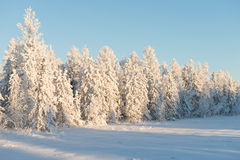 Scenic winter landscape in the taiga Royalty Free Stock Image