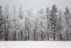 Scenic winter landscape Royalty Free Stock Photography