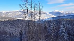 Carpathian Mountains, Bukovel, Ukraine stock footage