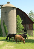 Scenico rurale Fotografie Stock