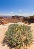 Scenico trascuri dall'isola nel cielo, deserto di Canyonlands di Moab Fotografia Stock Libera da Diritti