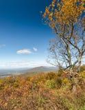 Scenico trascuri, Ridge Parkway blu, la Virginia Fotografie Stock