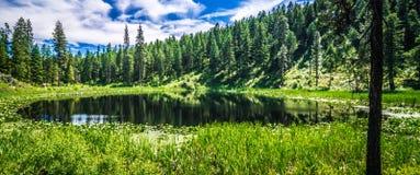 Scenics природы вокруг реки Вашингтона spokane стоковые изображения rf