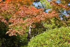 Scenics. Autumn stock images