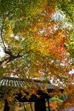 Scenics. Autumn royalty free stock images