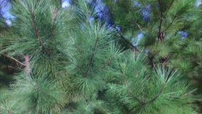 Scenics Oost- van Texas met meren, bos, pijpleidingen stock video