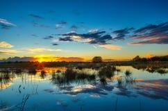 Scenics van het moeras Stock Fotografie