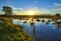 Scenics van het moeras Stock Foto's