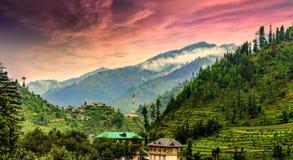 Sceniczna głęboka tropikalna lasowa dżungla przy Janjehli, himalaje, India Obrazy Royalty Free