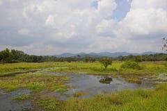 sceniczna lankijczyk wieś z jeziorem przy Wasgamuwa Zdjęcie Royalty Free