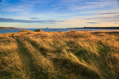 Sceniczna linia brzegowa wodołaz i labrador Zdjęcie Royalty Free