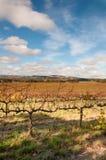 Sceniczna przejażdżka - winogradów jardy Adelaide, McLAren dolina - Fotografia Stock