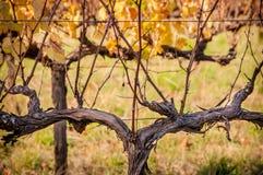 Sceniczna przejażdżka - winogradów jardy Adelaide, McLAren dolina - obraz stock