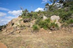 Sceniczne skały w John Forrest parku narodowym Zdjęcia Royalty Free