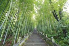 Sceniczni alpinisty kroka schodki obok bambusowego lasu Zdjęcie Stock