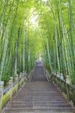 Sceniczni alpinisty kroka schodki obok bambusowego lasu Zdjęcia Stock