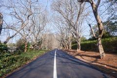 Sceniczni Drogowi Mieszkaniowi drzewa Fotografia Stock