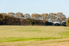 Sceniczni Krajobrazowi traw drzewa Zdjęcia Stock
