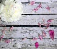 Sceniczny drewniany tło z białym peonia kwiatem menchia płatkiem i Zdjęcia Royalty Free