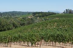 Sceniczny dukt winogrady przy winnicą w Napy dolinie, CA Zdjęcie Stock