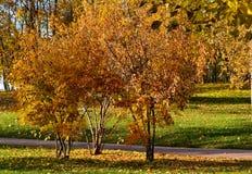 Sceniczny jesień krajobraz pięknie się tło charakteru wektora fotografia royalty free