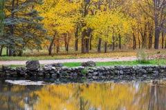 Sceniczny jesienny park z żółtymi drzewami zbliża jezioro, odbicie wewnątrz Zdjęcia Stock