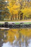 Sceniczny jesienny park z żółtymi drzewami zbliża jezioro, odbicie wewnątrz Obraz Royalty Free
