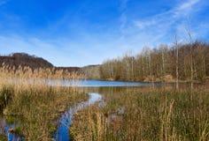 Sceniczny krajobraz jezioro w wiośnie i bagna Zdjęcie Stock