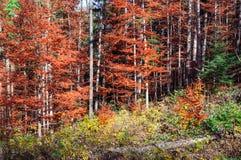 Sceniczny krajobraz las w spadku Zdjęcie Royalty Free