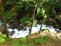 Sceniczny krajobraz w lecie z lasową rzeką w górach zdjęcia royalty free