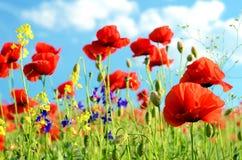 Sceniczny krajobraz z kwiatów maczkami przeciw niebu z chmurami odpoczywa, relaks, medytacja, stres ulga - pojęcie fotografia stock