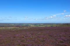 Sceniczny kwiatonośny wrzosu krajobraz zdjęcia royalty free